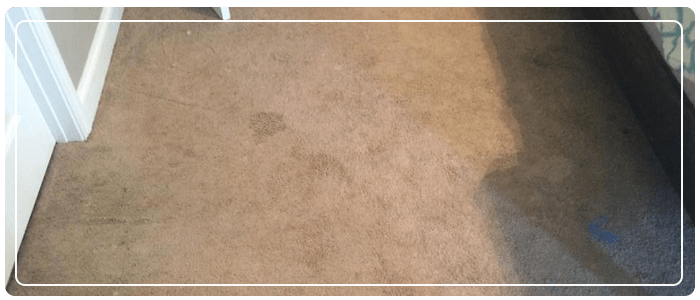 Carpet Cleaning is Important